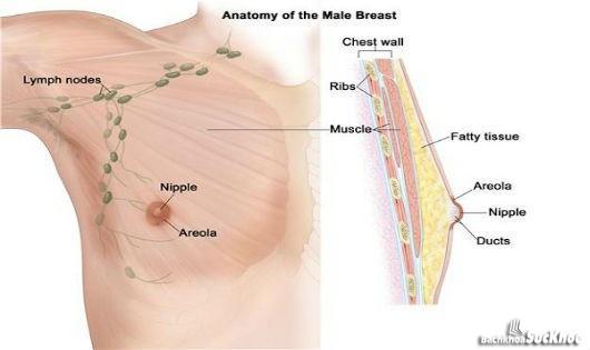 Bệnh ung thư vú: Khái niệm, nguyên nhân, triệu chứng,điều trị và cách phòng ngừa 2