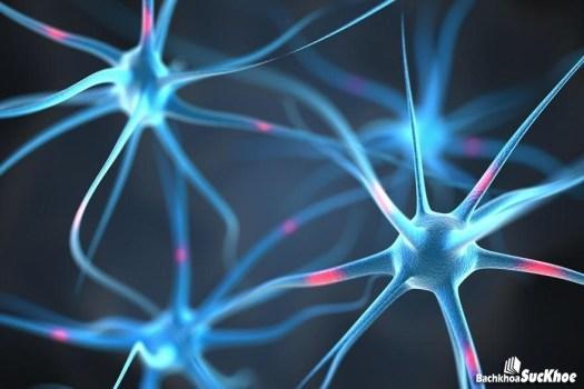 Sự tự miễn có thể tấn công các dây thần kinh khỏe mạnh