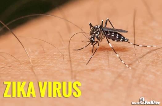 Muỗi nguyên nhân chính gây truyền nhiễm virus zika