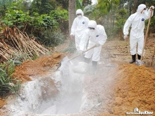 Các phòng ngừa bệnh dịch hạch ở Việt Nam